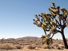 """A view of Joshua Tree National Park from """"California Continued"""" at The Autry"""